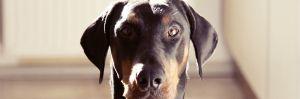 maulkorb-hund-design