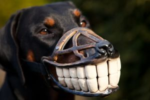 maulkorb smiley für Hund