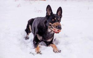 schaeferhund maulkorb werwolf