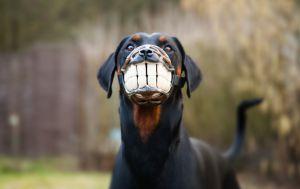 smiley-maulkorb-fuer-hund