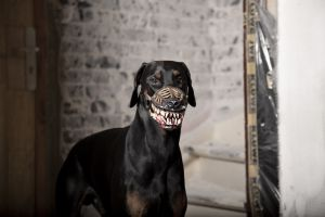 werwol-mulkorb-hund