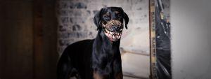 hunde maulkorb werwolf