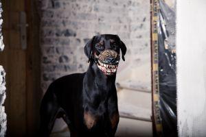 werwolf-dog-maulkorb2