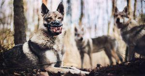weredog-maulkorb