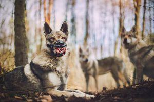 werwolf-hundemaulkorb-weredog