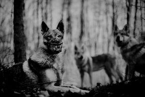 werwolf-hundemaulkorb-weredog-darken