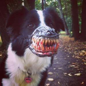 halloween-maulkorb-werwolf