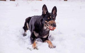 hundemaulkorb-design-aus-russland
