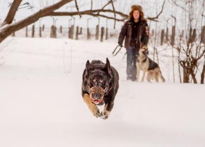 maulkorb-aus-russland-werwolf