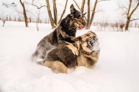 russischer-hundemaulkorb-werwolf-kaufen