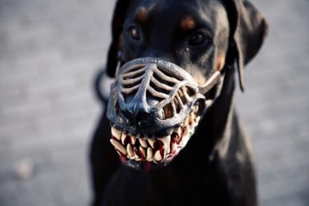 weredog-maulkorb-hund