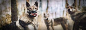 Werwolf Maulkorb kaufen