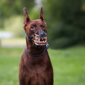 werwolf-maulkorb-dobermann
